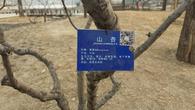 海淀公园启用二维码植物标识牌