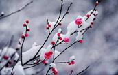 七绝一首:霜降感怀 -  周天红(无悔斋主) - 周天红人生博客