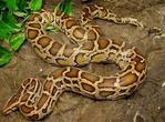 水蛇青竹蛇白蛇 哪个最长?_脑筋急转弯_奇飞知识网
