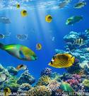 缤纷多样海底海洋生物摄影高清图片 - 大图网设...