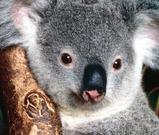 澳洲的野生动物 - 冰融 - 冰融的博客