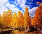新疆汽车租赁美景图178