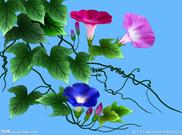 梨 花 / 蓝 色 的 大 海 - 蓝色的大海 - 蓝色的大海的博客